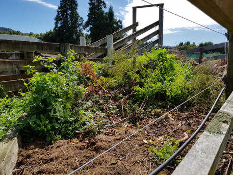 Mixture of hedge trimmings to mulch before