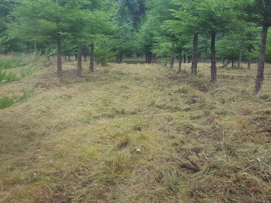 Mulching rows for a tree research area after