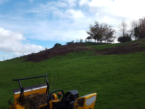 Gorse Mulching After