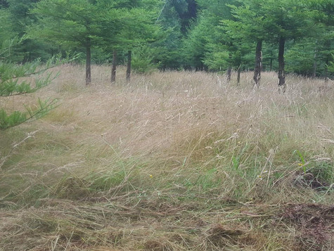 Mulching rows for a tree research area before
