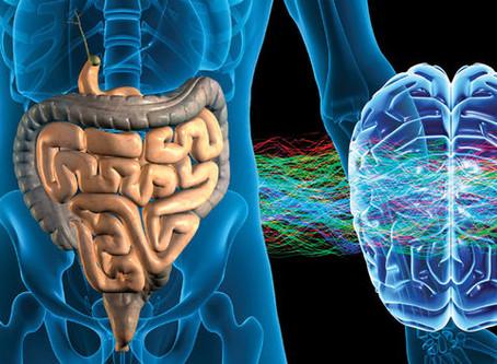 Conexão Cérebro-Intestino