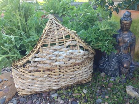 Nourishing Herbs for Postpartum Health