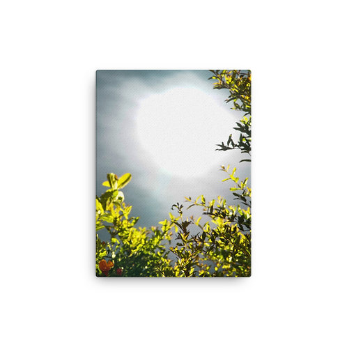 """Midnight Dream"" Canvas Print"