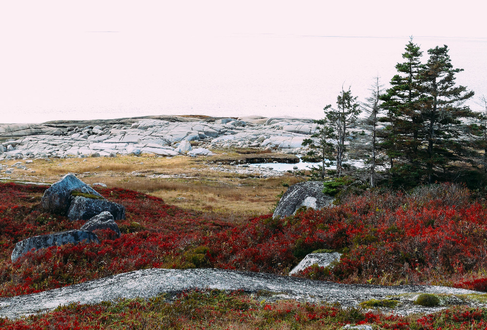 peggyscove-9_edited