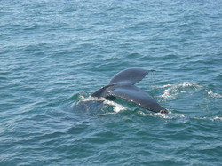 whale-tail-1221068