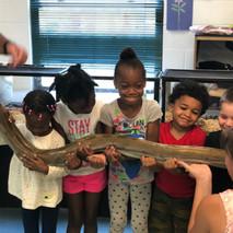 What a Looooooooooong Snake!!!!!!