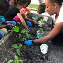 Children help grow their plants