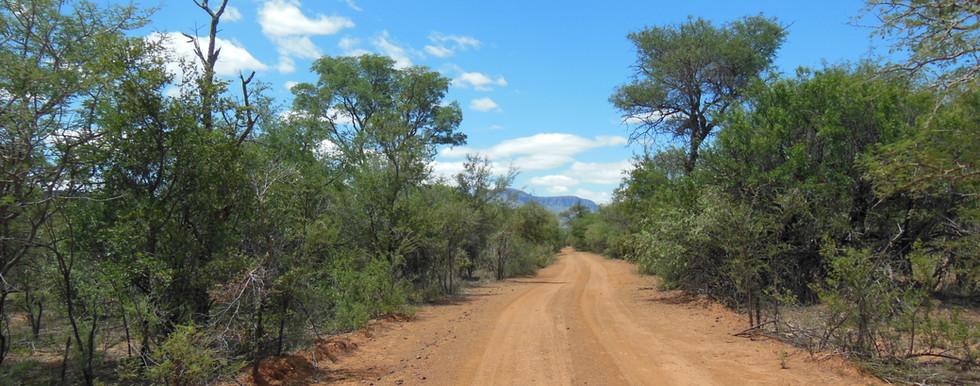 Großwildjagd , Büffeljagd, Horrido Safaris