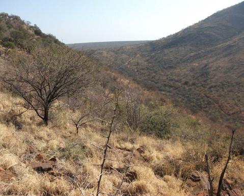 hunting safari, jagdsafari, jagdreise, jagdreise afrika, hunting outfitter, hunting africa, jagd afrika, hunting adventure, jagen in afrika, jagderlebnis afrika, büffeljagd, big game hunting, großwildjagd, trophhäenjagd, trophy hunting, mark dedekind safaris, nolte roets safaris, dries visser safarism numzaan safaris, diana jagdreisen, blaser safaris,