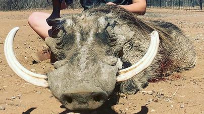 Warzenschweinjagd, Büffeljagd, Großwildjagd, Jagdurlaub Afrika, hunting safari, jagdsafari, jagdreise, jagdreise afrika, hunting outfitter, hunting africa, jagd afrika, hunting adventure, jagen in afrika, jagderlebnis afrika, büffeljagd, big game hunting, großwildjagd, trophhäenjagd, trophy hunting, mark dedekind safaris, nolte roets safaris, dries visser safarism numzaan safaris, diana jagdreisen, blaser safaris, buffalo hunting, büffeljagd