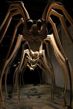 zirnekļi_006.jpg