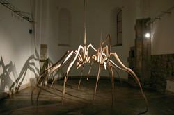 zirnekļi_001.jpg