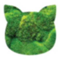10644325-Moss-texture-Stock-Photo - Copy