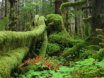 moss-pacific-northwest-quinault-rainfore