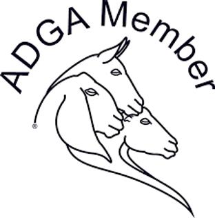 adgamemberimage.png