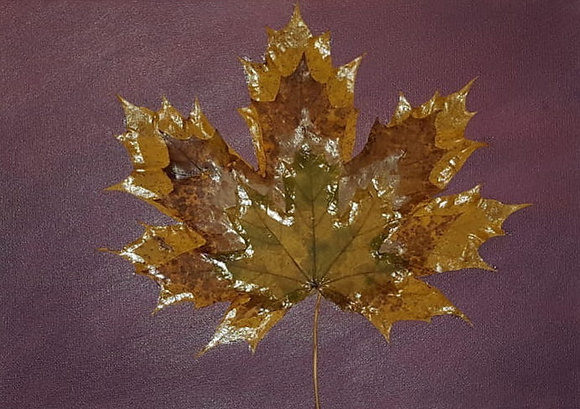 Leaf Art Craft Pack