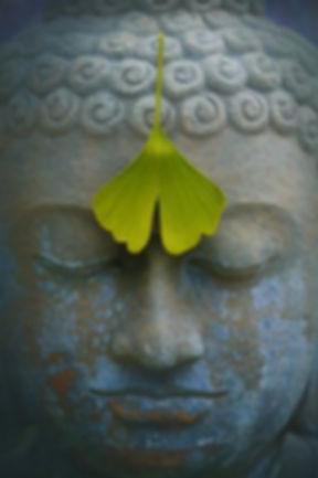 buddha-2728793__340.jpg