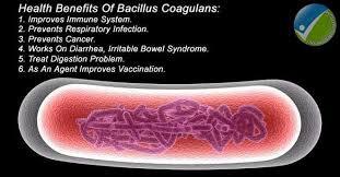 SPORE DI BACILLUS COAGULANS - Aver cura del nostro microbiota