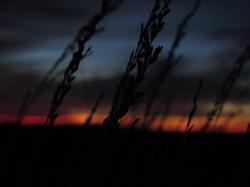 Grains at sunset, Australia