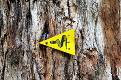 Snake sign at tree in the forest, Western Australia