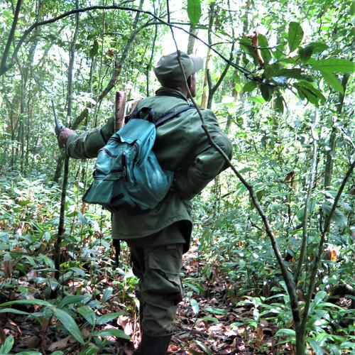 Ranger in Kibale Forest, Uganda