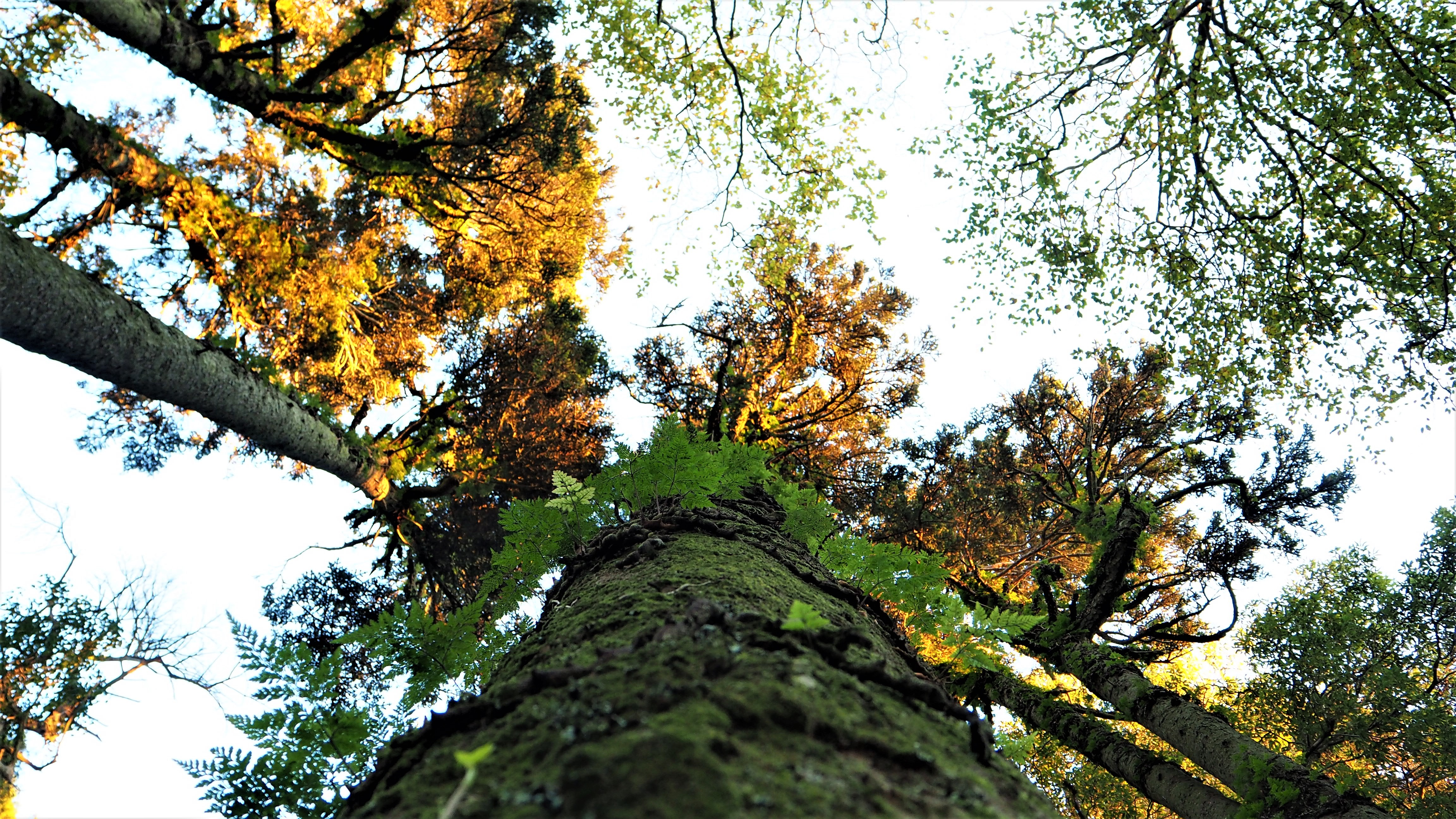 Trees of Sintra