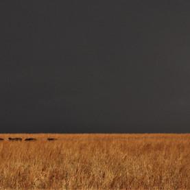 Wild life and dark sky in Kidepo National Park, Uganda