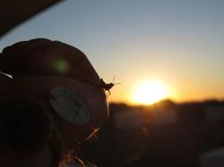 Grashopper on hand watching sunset