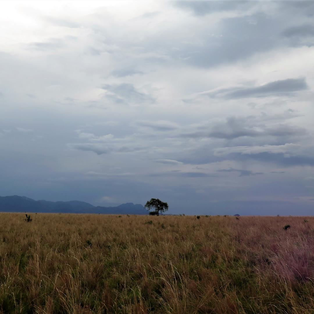 Dark Kidepo National Park, Uganda