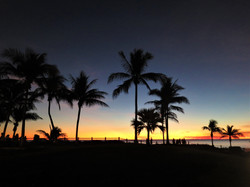 Palmtrees at sunset in Broome, Australia