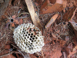 Bee hole