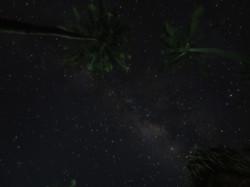 Nightsky and palmtrees, Indonesia