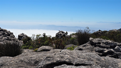 View from Table Mountain, Cape Town