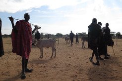 Local farmers of the Karamoja, with stock and sticks, at the market