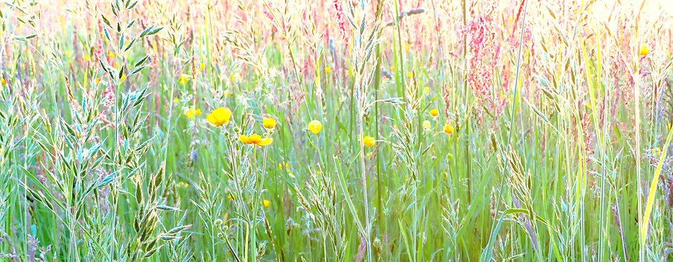 Blumenwiese - Blick ins Licht (3).jpg