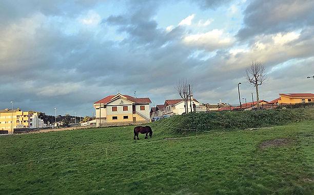 Uno de los equinos en una parcela del barrio de La Vallina. (L. VENTURA)