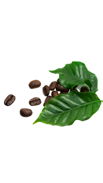 Coffee-Leaf-And-Beans.png