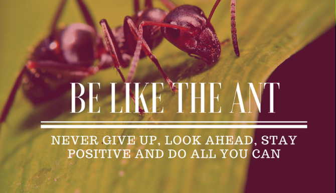 Be like the Ant: Never give up, look ahead, stay positive & give 100%