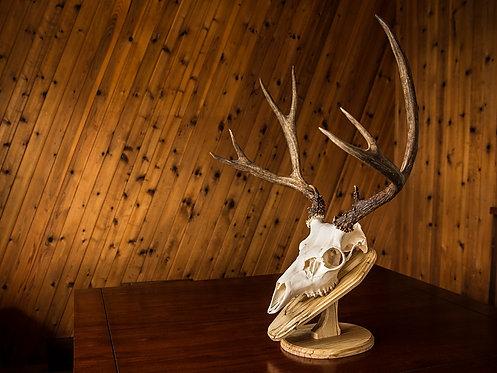 Deer Skull Plaque Plans