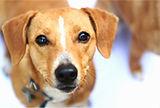 Homeopathy pet health | Empowering Better Health | Columbus Ohio | Ohio | Homeopathy | Deb Holcomb