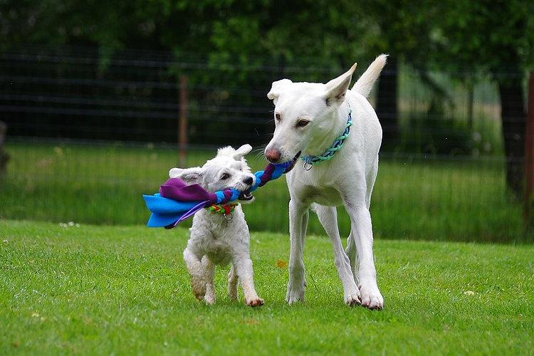 DogFantaisy2.jpg