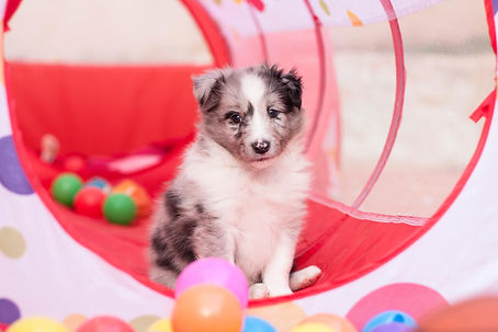 Agility puppy class annonce.jpeg