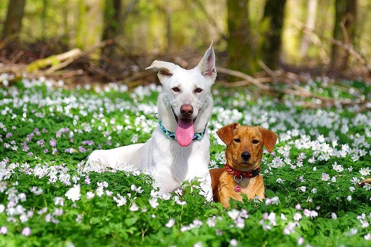 DogFantaisy3.jpg