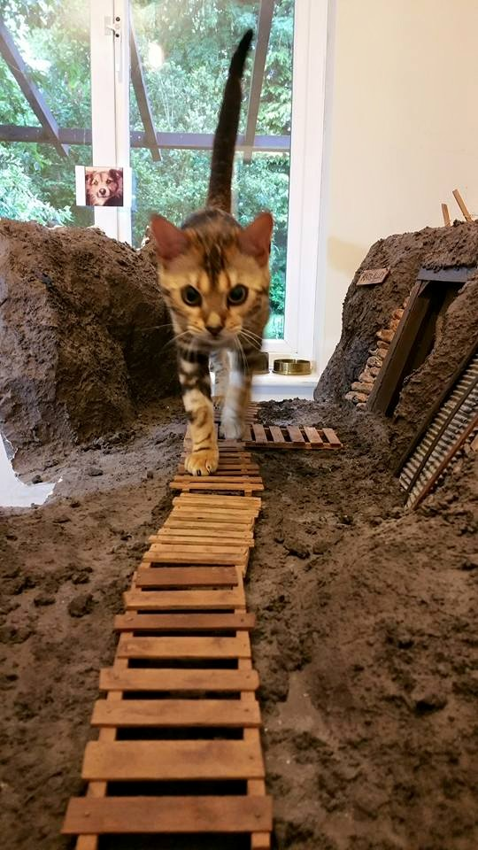 Bernadette exploring the trench!