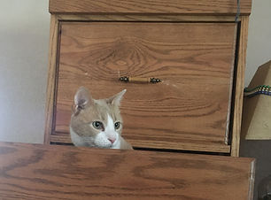 our dilute yellow cat, Tater Tot, is sitting in the 2nd drawer of our filing cabinet shortly after our move to Colorado