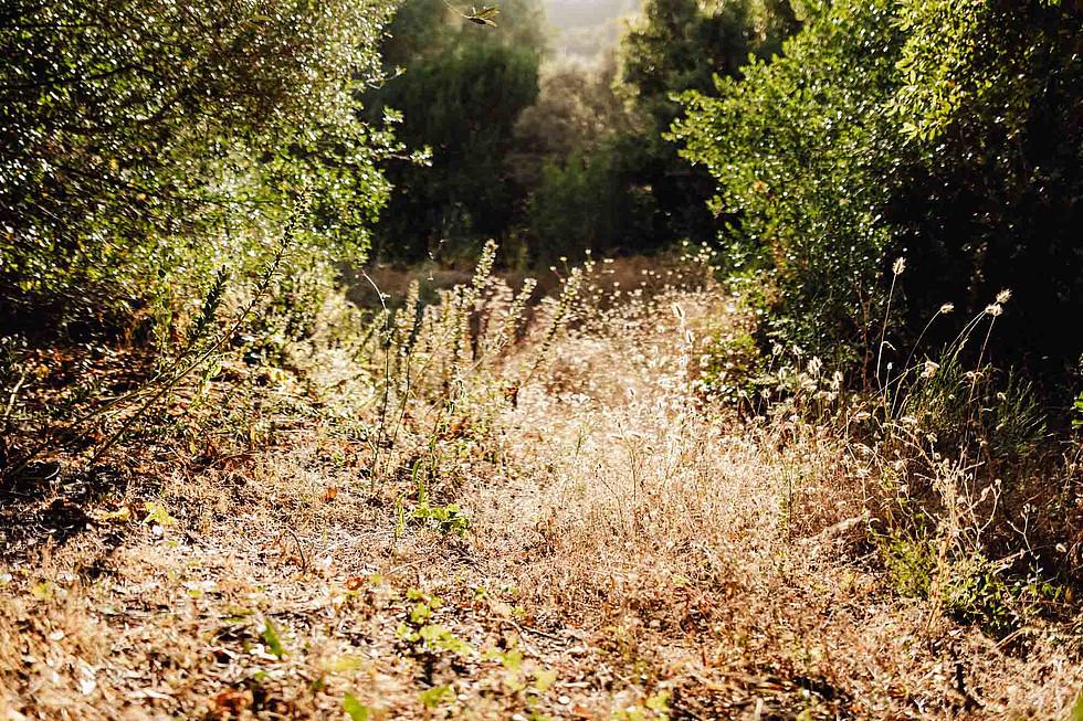 Foto di coppia in Sardegna _ Prematrimoniale romantico nel verde_36.jpg