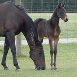 Venus Serena and Bettor's Delight filly