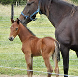 Tricky Woman and Art Major colt