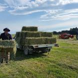 Making hay at Arden