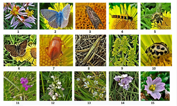 6.  .Group photo 1 - 15.jpg